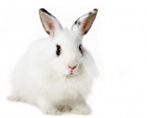 White-Rabbit-Cool-Wallpapers 05-1