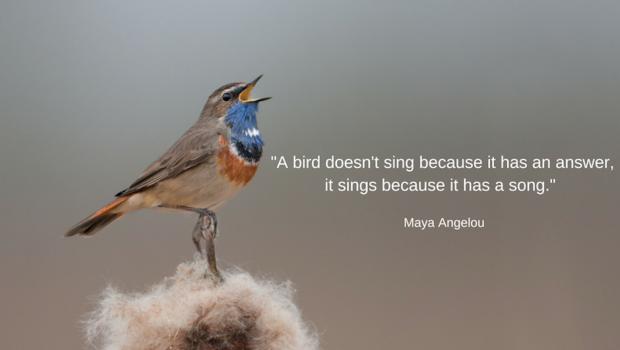 a-bird-doesnt-sing