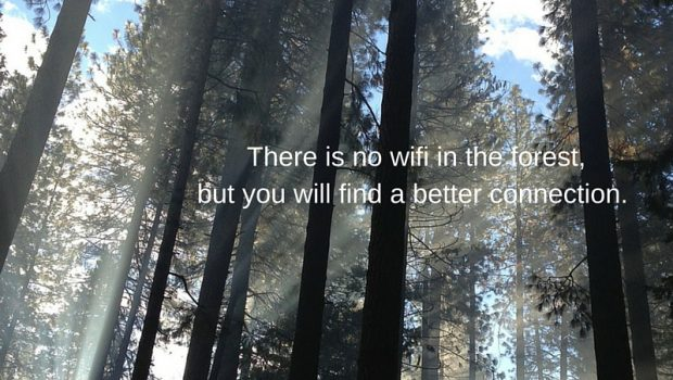 forest wifi