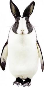 pingonijn_1